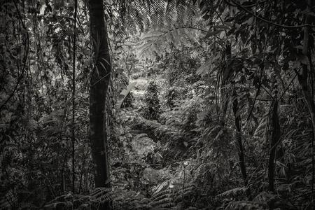 plants species: Silhouette in bianco e nero, B & W, ombra piante decorative specie forestali naturali nella foresta grande, giardino come un ambiente di Dio su sfondo bianco a colori tonica e messa a fuoco selettiva
