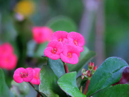 pink flowers with green leaves look very beautiful