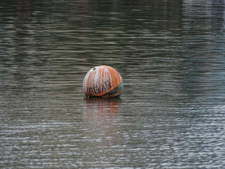 floating buoy in the marina