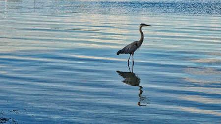 bird in the sea sunset