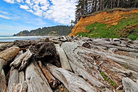 Drift Logs on Oregon Pacific Coast, Oswald West State Park, Short Sand Beach Stock Photo