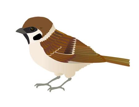 Vector Illustrations of Familiar Wild Bird Sparrows Ilustración de vector