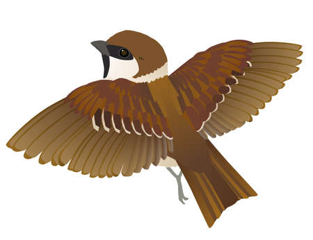 Vector illustration of the flapping wings of a familiar wild bird sparrow Stock Illustratie