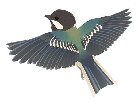 Vector illustration of cute wild bird Shijukara