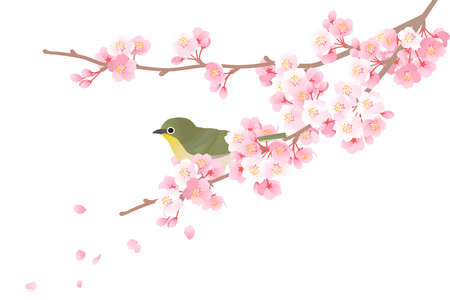 Vector illustration of a mejiro on a branch of a cherry tree
