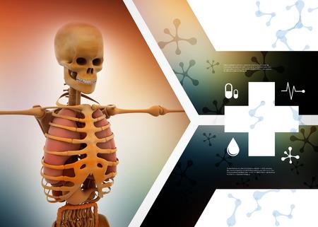 Human skelton Stock Photo