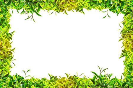 Green tea frame on white background