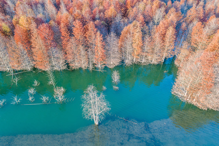 Chinese Redwood landscape aerial view Imagens
