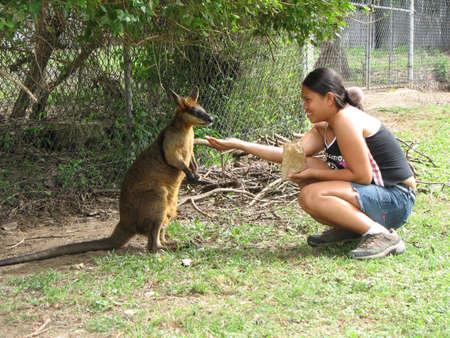 Feeding a Wallaby, Brisbane, Australia