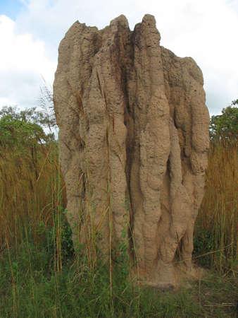 シロアリ塚、オーストラリアのノーザン テリトリー