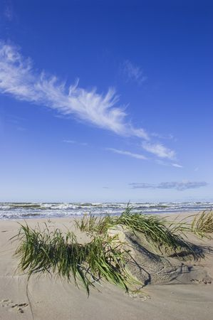 Small dune and Seagrass after storm photo