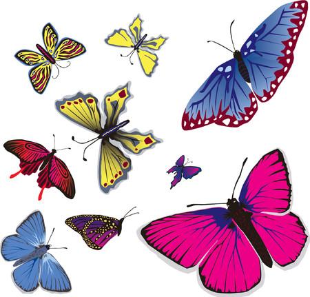 illustrates: Vector illustration of many flying butterflies.