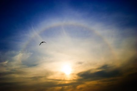 Circular rainbow around the setting sun flying seagull Stock Photo