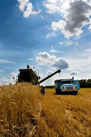 Combine working in field at harvest time Stock Photo - 3538944