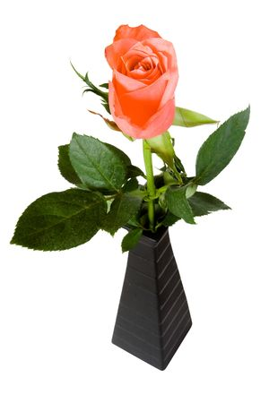 Pink rose in black vase isolated on white. path included. photo