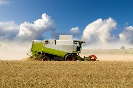 agricultural machinery: Combine harvesting corn in a large field Stock Photo