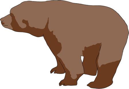 kahverengi: illustration of wild brown bear (Ursus arctos) Çizim