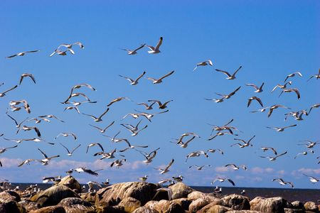 Many flying seaguls at the sea coast