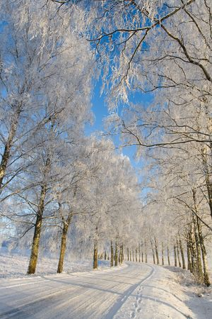 Country roud with frost covered birch tree allay in winter Stock Photo - 5941571