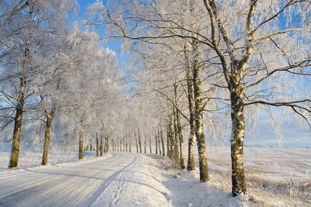 tranquil scene: Country roud with frost covered birch tree allay in winter Stock Photo