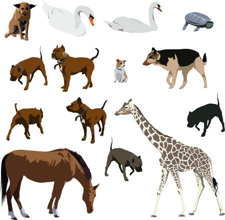 Set of animal vector illustrations. Horse, dog, giraffe, turtle, swan