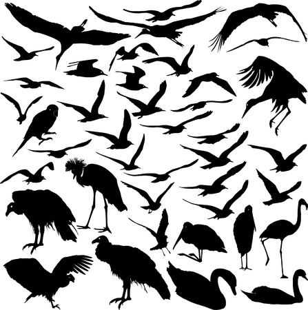 Set of vector silhouettes of flying birds Vector