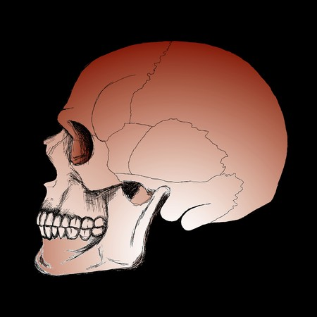drawing of human skull sketch on the black background Stock Vector - 8030505