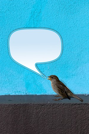 birdsong: House Sparrow (Passer domesticus) on blue Wall twittering with empty text bubble. Stock Photo