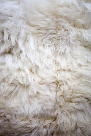 Washed white sheep fur texture suitable for background