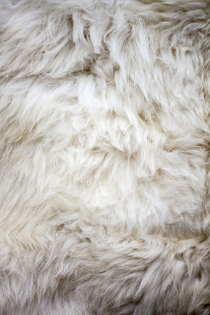 Washed white sheep fur texture suitable for background photo