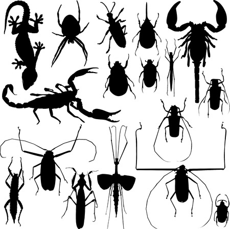 poisonous insect: Set of Insect, lizard, spider silhouettes vector