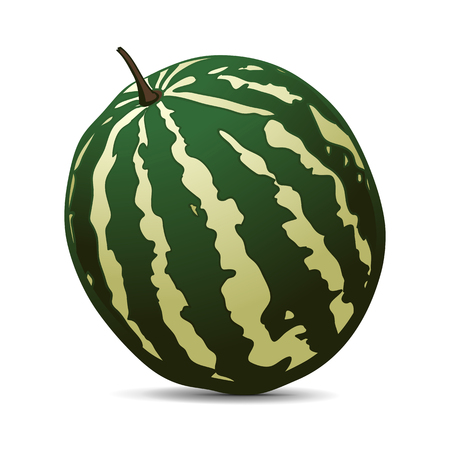 water melon: Ripe Watermelon on white background. Hand drawn vector illustration. Illustration