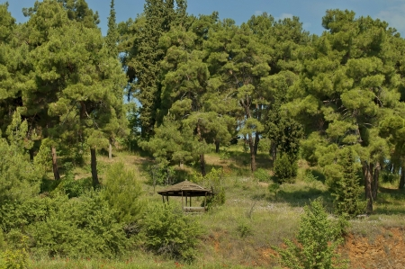 kerkini: Forest nook by Kerkini shore, nord Greece Stock Photo