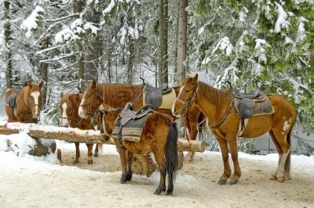 Horse riding club in Borovetz resort  Rila mountain, Bulgaria  photo