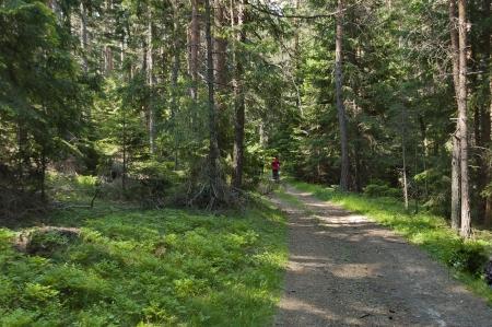 Walk at deep forest in mountain Rila, Bulgaria
