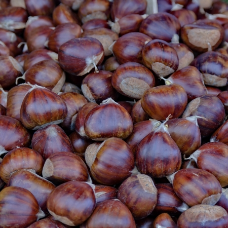 disarray: Chestnut fruits background