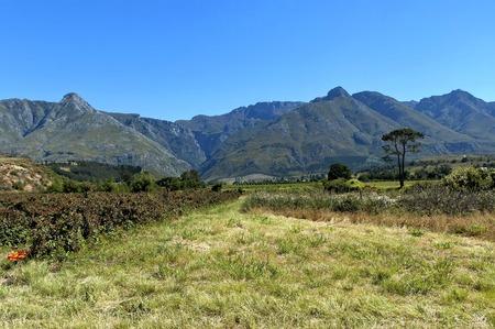 Blackberry plantation in Swellendam area, Langeberg mountain, Western Cape South Africa Banco de Imagens