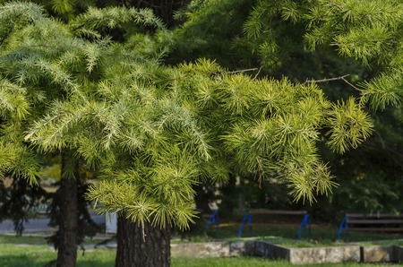 riverside trees: Part of riverside park in Ruse town, Bulgaria