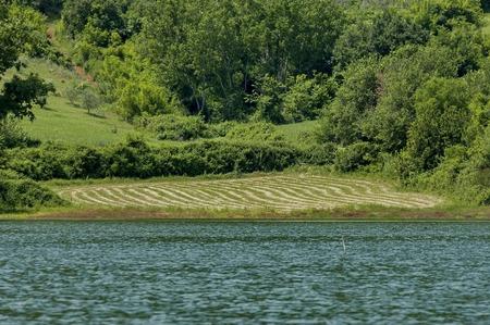 kerkini: Landscape of Kerkini shore with cut meadow, Kerkini lake, nord Greece