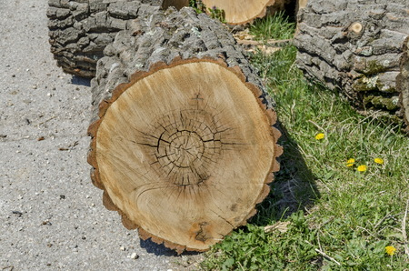 slit: Slit wood trunk in grass, Zavet town, Bulgaria