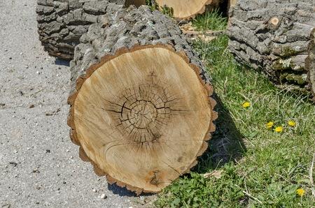 slit: Tronco de madera de hendidura en la hierba, la ciudad Zavet, Bulgaria