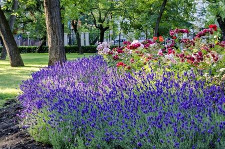 bulgaria: Doctors Garden flowers in Sofia, Bulgaria