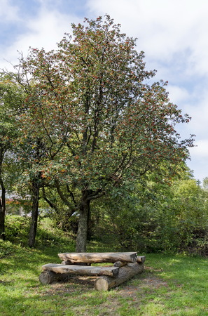 repose: Wood table and bench in Pancharevo park, Bulgaria