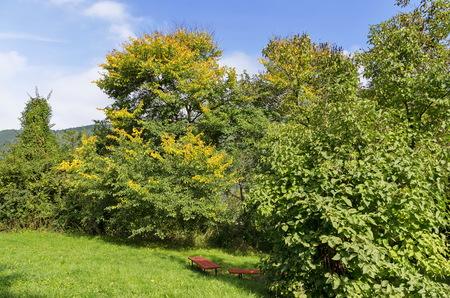 nook: Trees nook in Pancharevo park, Bulgaria