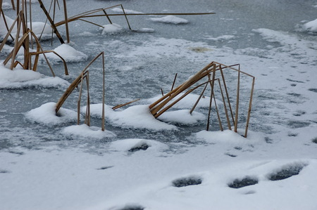 straw twig: Frozen pond surface in park at winter Stock Photo