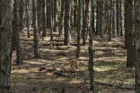 balkan: Forest in Balkan mountain