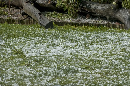 Big quantity of ice ball over the grass in garden, Фото со стока