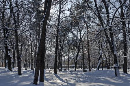 Winter snow garden in Sofia park Stock Photo