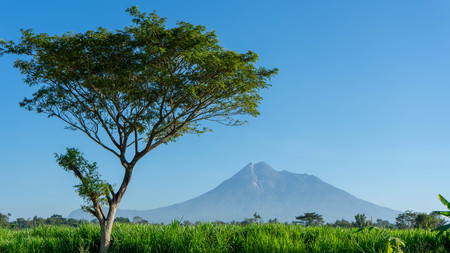 Beautiful mountain scenery in summer with the foreground of rice field and shady trees