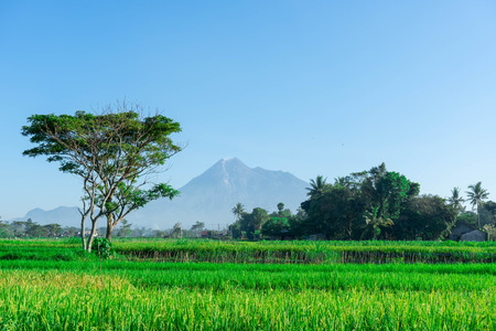 views of rice fields with mountain backgrounds in a rural area in Indonesia. Asian Culture Reklamní fotografie